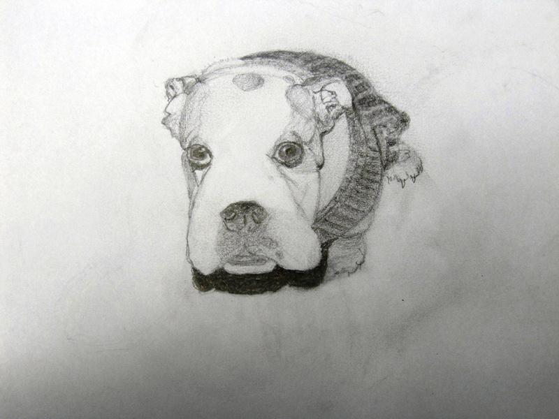 Jasper puppy